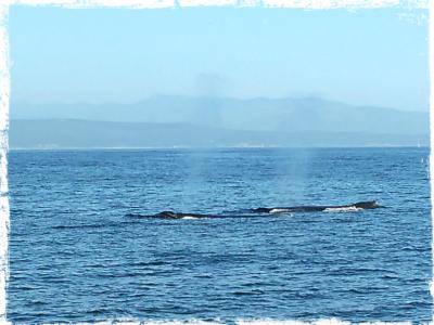 balene-monterey